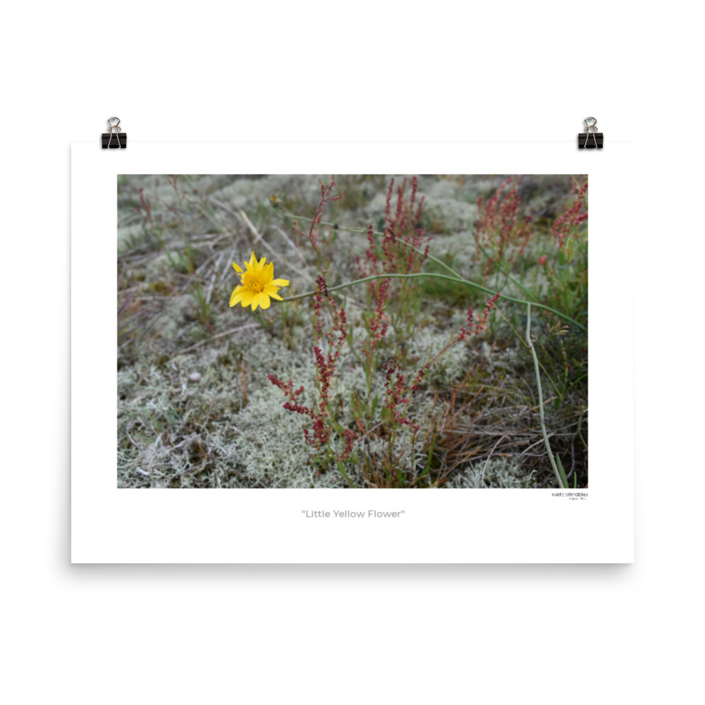 Photo poster called Little Yellow Flower